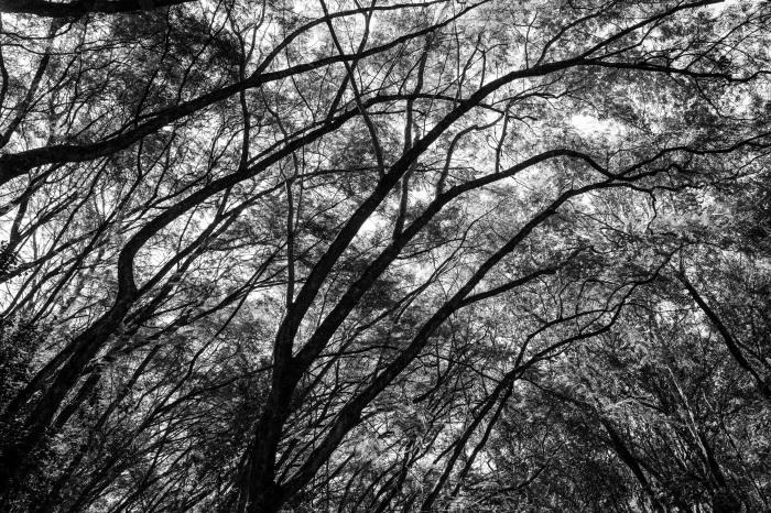 kevinouma_onetouchlive_ngongroadforest-7