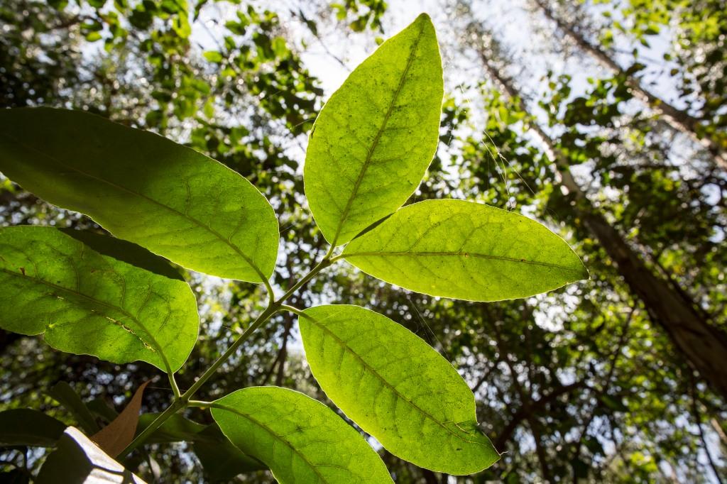 kevinouma_onetouchlive_ngongroadforest-9